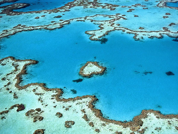 Snorkel or dive around the coral and sea life at the nearby Great Barrier Reef